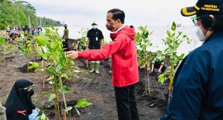 Rehabilitasi Mangrove oleh Presiden Jokowi